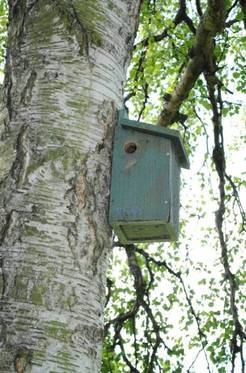 St. George's Park bird box and wildlife project
